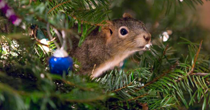 rescued-squirrel-christmas-tree-fb
